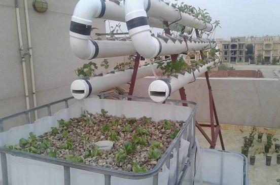 دراسة جدوى مزرعه سمكيه فوق الاسطح
